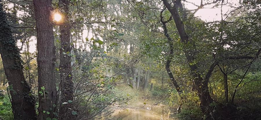 early morning run by river ©Sarah Watkins 900x416