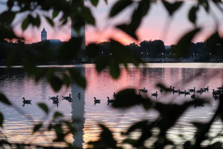 frithjov-iversen-geese_web