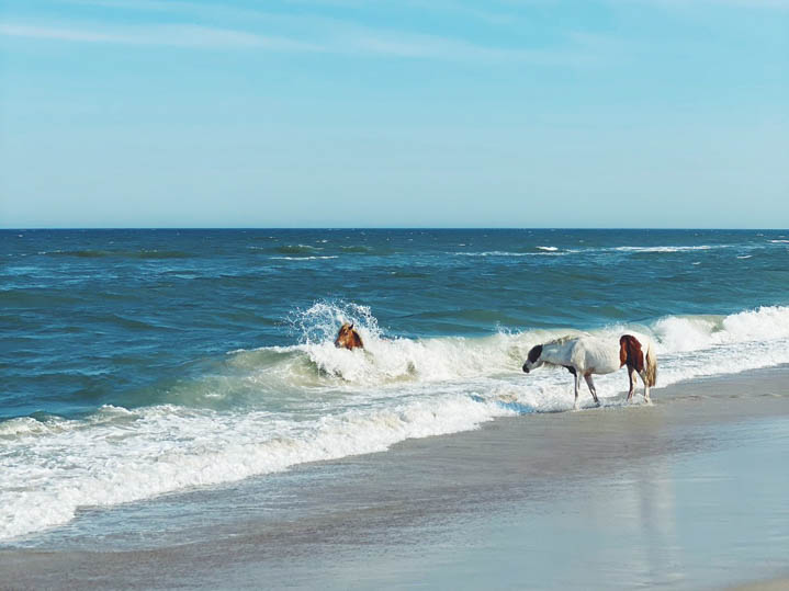 assateague-web