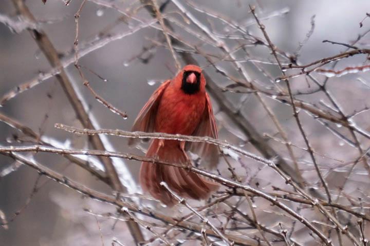 andrea-zukowski-cardinal-web