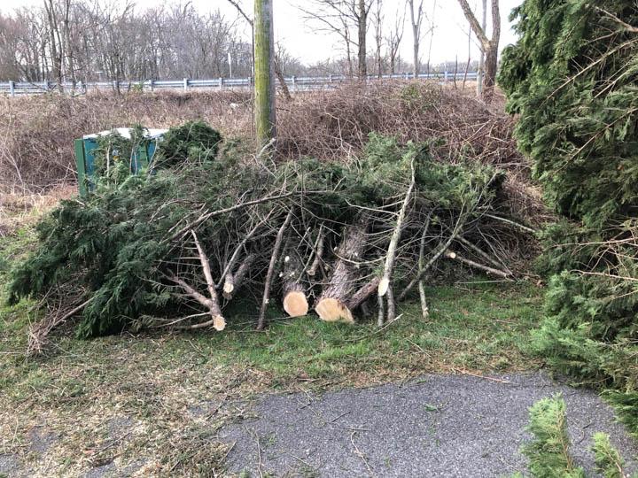 tree-2018-web