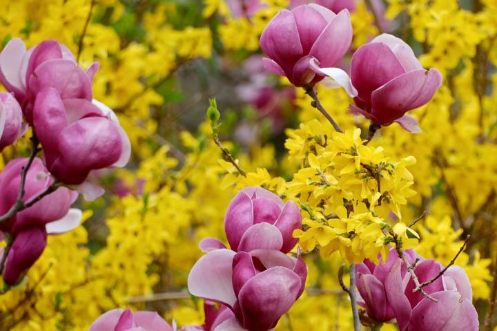 pink-yellow-web
