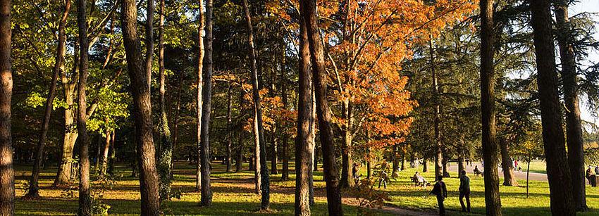 csm_nature_parcdeparilly_arbre_laurencedaniere_860_7ced4b49c5