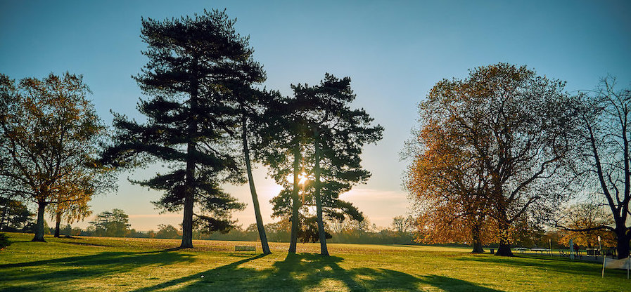 Covid week 2 trees