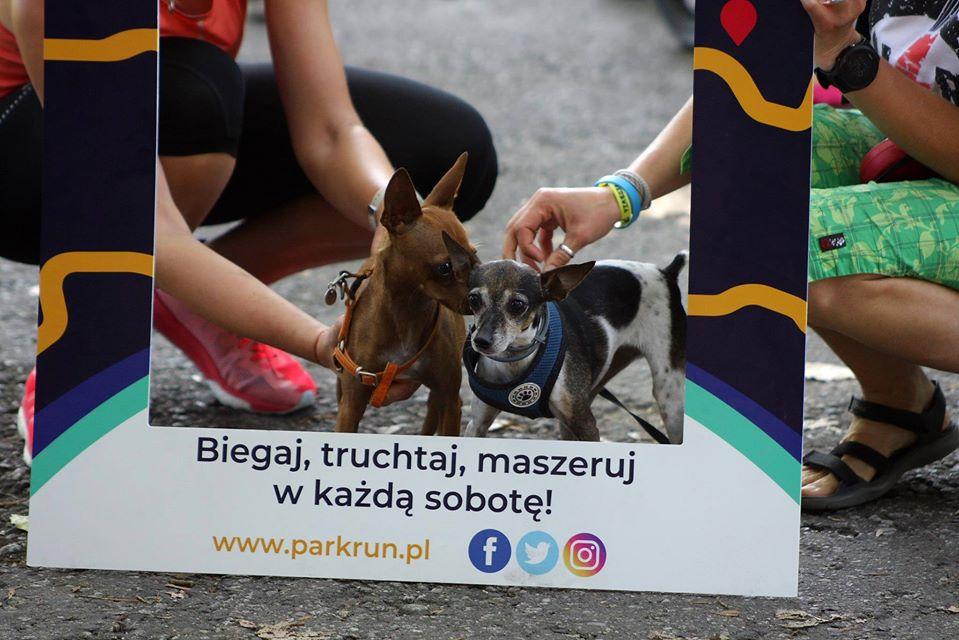 pieski Praga