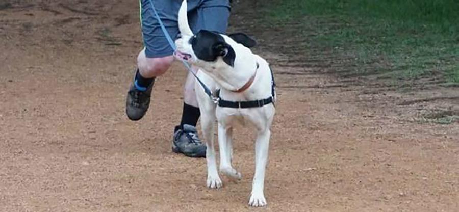 DUbbo_parkdog