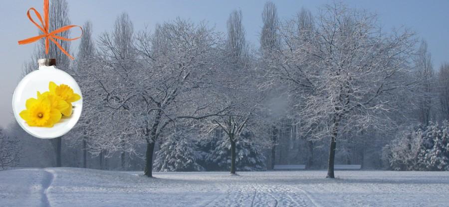 Immagine 17 dicembre