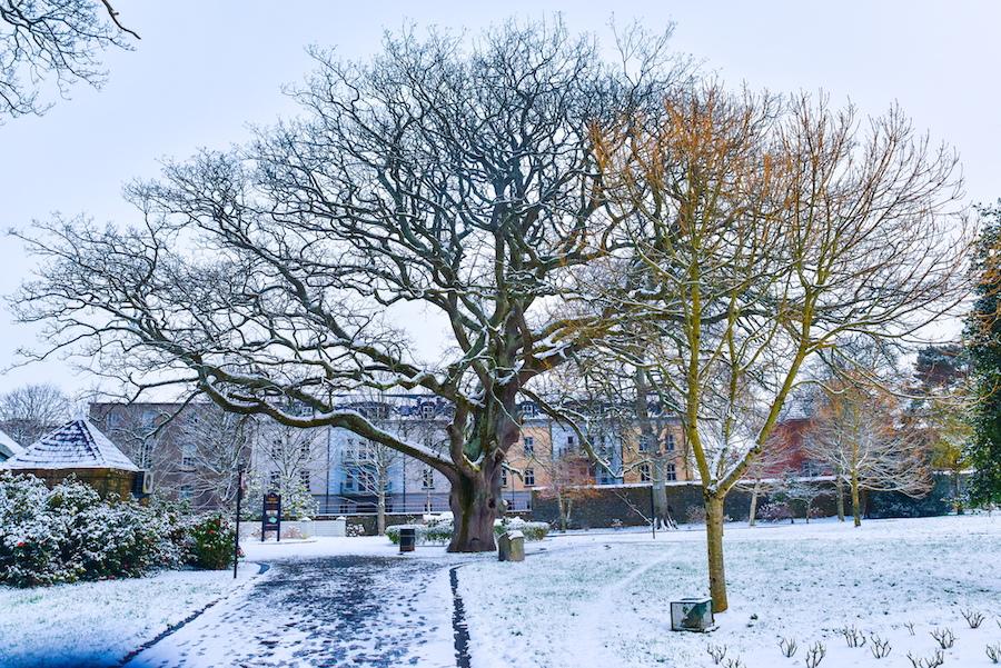 D8N_6327-2023 TOWN PARK snow