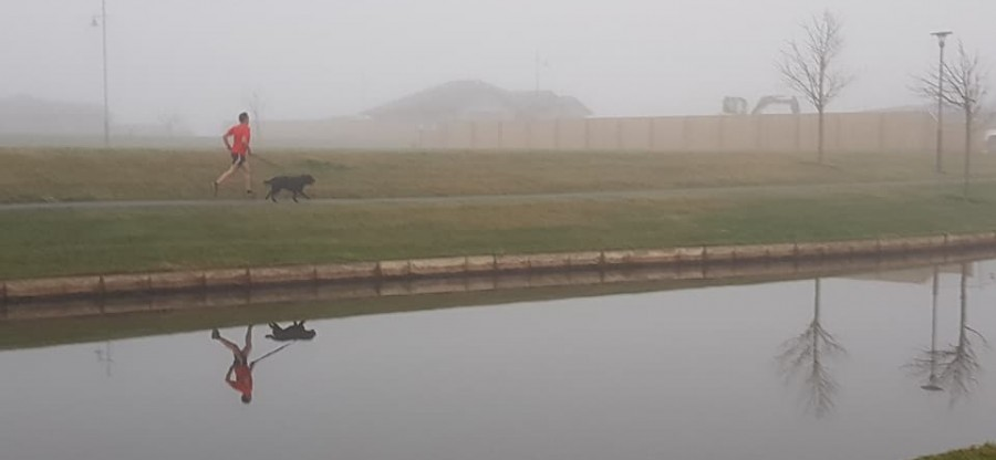 pegasus fog