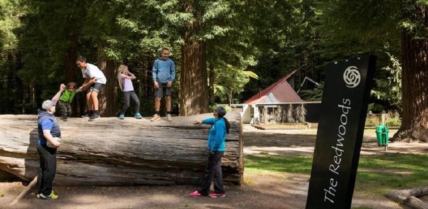 Rotorua Redwoods Achilles