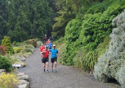 Dunedin hill 2