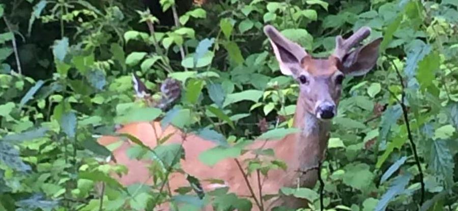deer_900x416