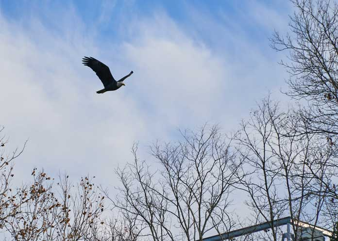 collegepark_20171202_eagle_sm