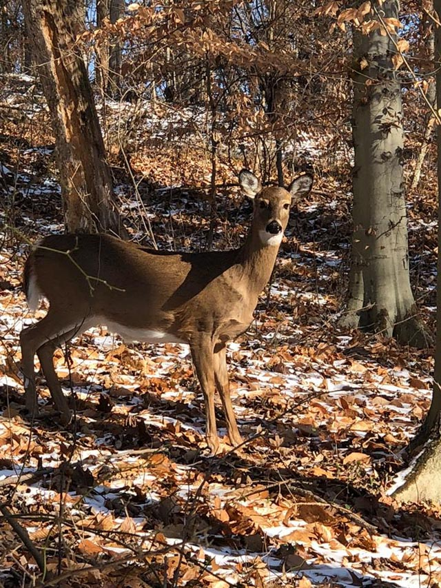 deer_leakinpark_web