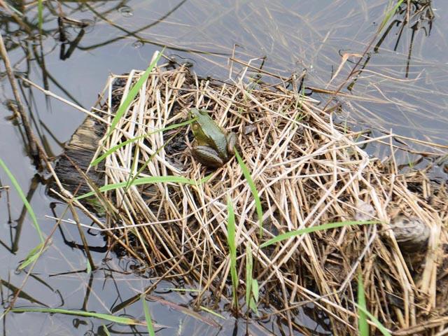 frog_collegepark_web
