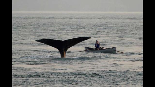 whale2_crissyfield_web