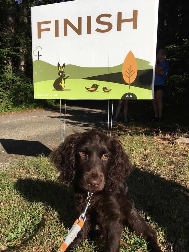 deep run_20180825_dog at finish