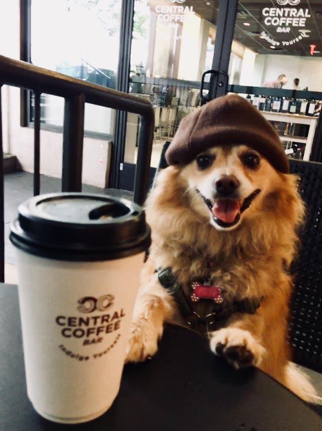 foxy_coffee_web