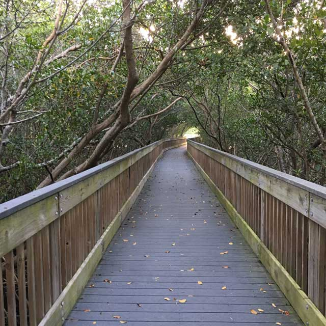 20190426_weedonislandpreserve_boardwalk2_web