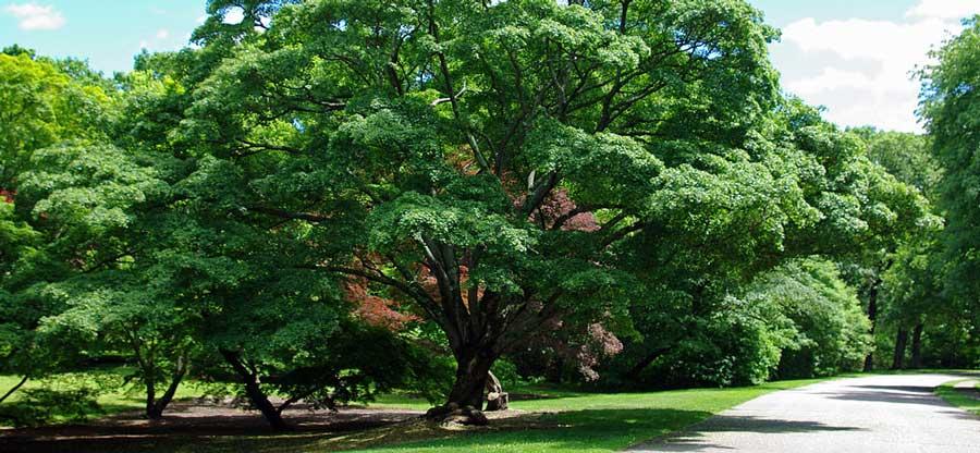 arboretum_road_900x416