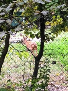 ospite cervo