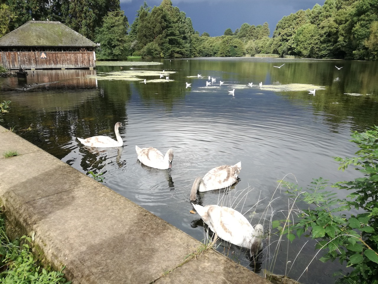 HALL - Newport - Lake at NT Tredegar House