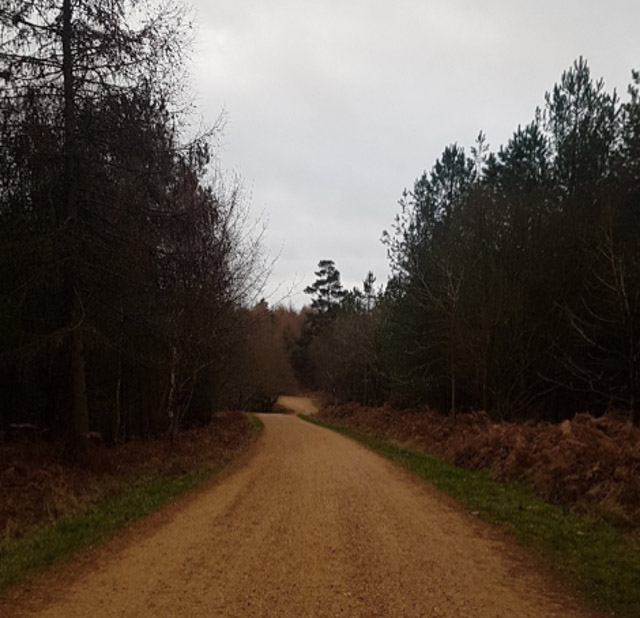 the path to Alice Holt