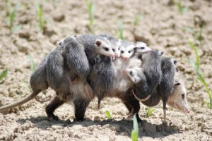 Fur-babies
