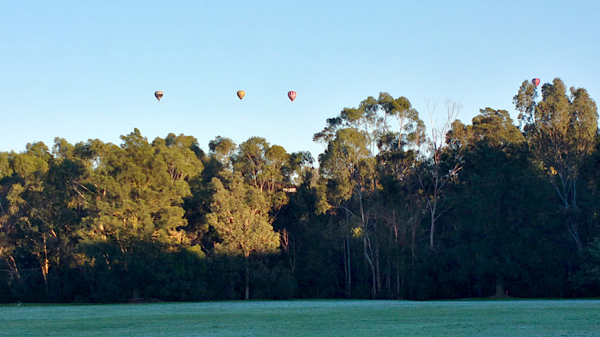 A four hot air balloons floating in blue skies above a line of trees.