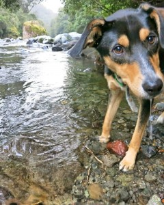 Scout in river