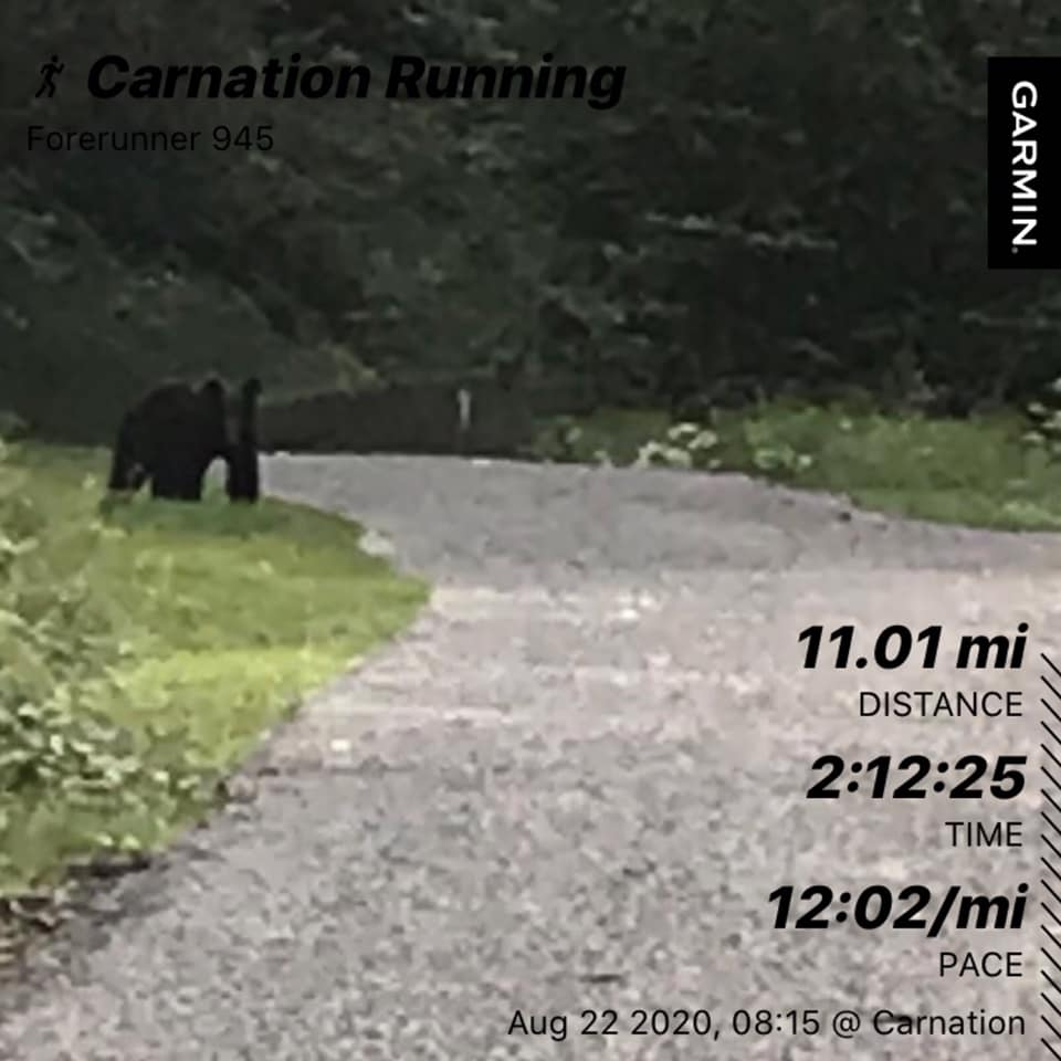 Bill bear