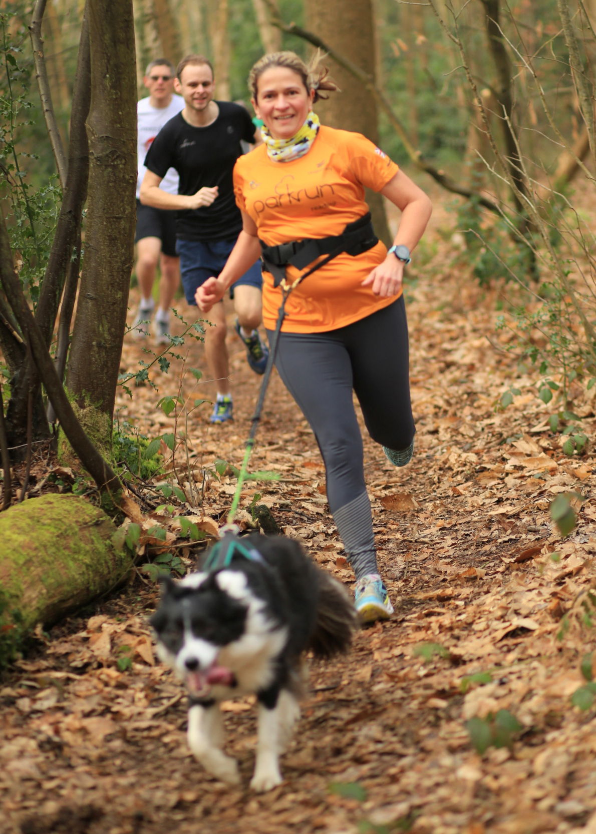 Teresa runs through an Autumn forest with border collie Trudy running ahead on her running harness and lead