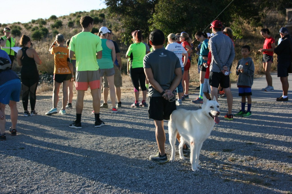 This dog is keen to start parkrun