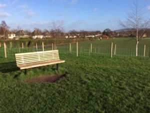 A bench against a background of green grass, saplings and blue sky
