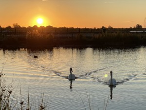 sun, swans and tinkerbelle