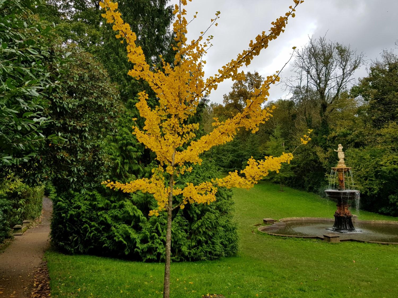Dunorlan autumn