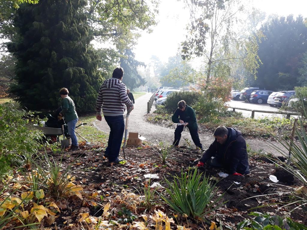 Bulbs planting 5Nov18 (4)
