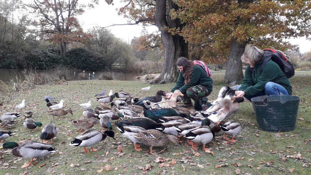 Duck feed Nov19 (3)