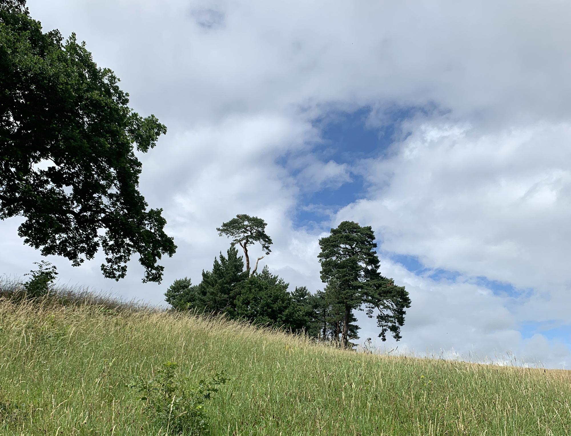 2020-07-02 trees