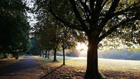 Grovelands parkrun, Enfield