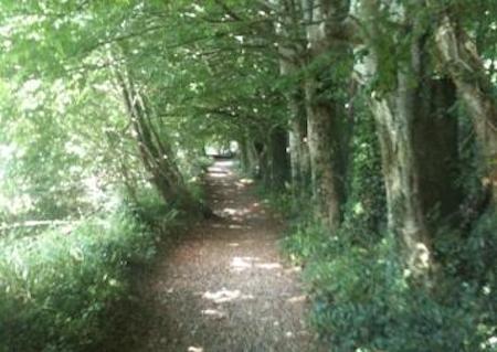 Knockanacree Woods parkrun